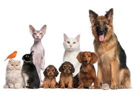 veterinaria 3